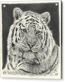 Tiger Drawing Acrylic Print