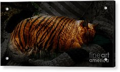 Tiger Dreams Acrylic Print by Kathi Shotwell
