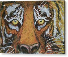 Tiger Eyes Acrylic Print by Patricia R Moore
