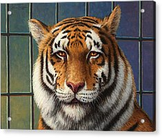 Tiger In Trouble Acrylic Print