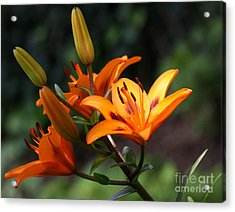 Tiger Lillies Acrylic Print by DazzleMe Photography
