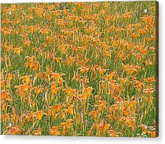 Tiger Lillies Acrylic Print by Luciana Seymour