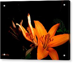 Tiger Lily Acrylic Print by Joanne Smoley