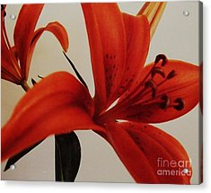 Tiger Lily Acrylic Print by Marsha Heiken