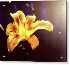 Tiger Lily On Waters Edge Acrylic Print by Bob Orsillo