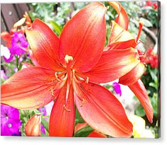 Acrylic Print featuring the photograph Tiger Lily by Sharon Duguay