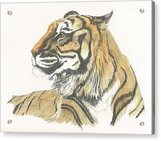 Tiger Acrylic Print by Liz Rose