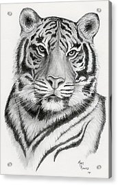 Tiger Acrylic Print by Mary Rogers