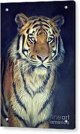Tiger No 2 Acrylic Print