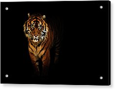 Tiger On A Black Background Acrylic Print