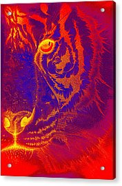 Tiger On Fire Acrylic Print by Mayhem Mediums