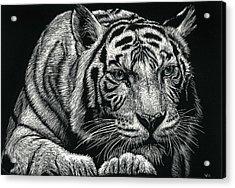Tiger Pause Acrylic Print