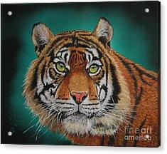 Tiger Portrait......amur Tiger Acrylic Print