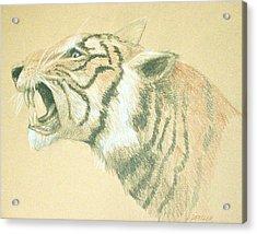 Tiger Roaring Acrylic Print by Deborah Dendler