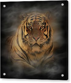 Tiger Acrylic Print by Sandy Keeton