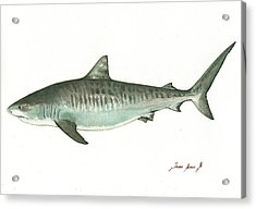 Tiger Shark,  Acrylic Print