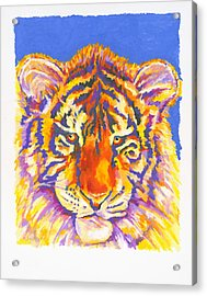 Tiger Acrylic Print by Stephen Anderson
