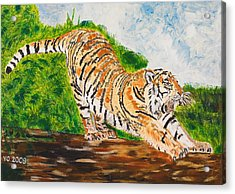Tiger Stretching Acrylic Print by Valerie Ornstein