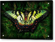 Acrylic Print featuring the photograph Tiger Swallowtail by Iowan Stone-Flowers