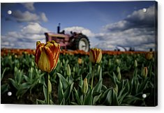 Acrylic Print featuring the photograph Tiger Tulip by Ryan Smith