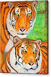 Tiger Twins Acrylic Print by Jose Cabral
