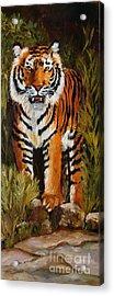 Tiger Wildlife Art Acrylic Print by Mary Jo Zorad