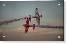 Tiger Yak 55 Acrylic Print by Dorothy Cunningham