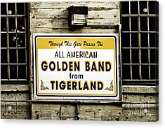 Tigerland Band Acrylic Print by Scott Pellegrin