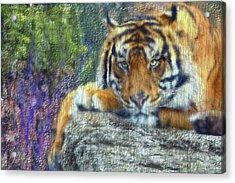 Tigerland Acrylic Print by Michael Cleere