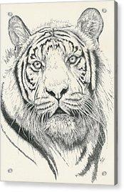Tigerlily Acrylic Print by Barbara Keith