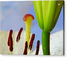 Acrylic Print featuring the photograph Tigerlily Close-up by Ana Maria Edulescu
