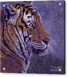 Tiger's Thoughts Acrylic Print by Svetlana Ledneva-Schukina