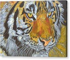 Tigress Acrylic Print by Angela   Cater