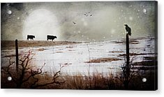 'til The Cows Come Home Acrylic Print by Theresa Tahara