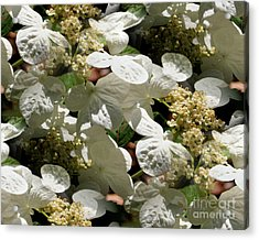 Acrylic Print featuring the photograph Tiled White Lace Cap Hydrangeas by Smilin Eyes  Treasures