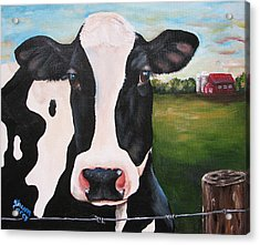 Till The Cows Come Home Acrylic Print by Laura Carey