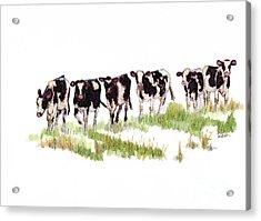 Till The Cows... Acrylic Print