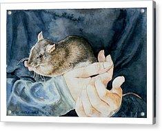 Tilly Acrylic Print by Eileen Hale