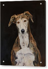 Tilly The Lurcher Acrylic Print