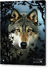 Timber Wolf Acrylic Print by Robert Foster