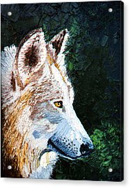 Timberwolf Acrylic Print by Stan Hamilton