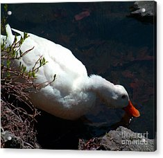 Time For A Drink Acrylic Print by RC DeWinter