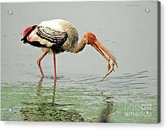 Time For A Meal Acrylic Print