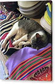 Time For A Siesta Acrylic Print