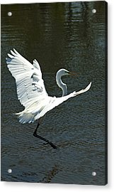 Time To Land Acrylic Print