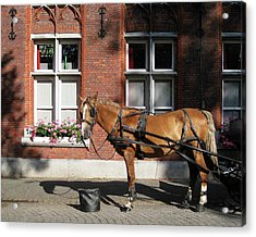 Time To Rest Acrylic Print by David L Griffin