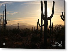 Timeless Acrylic Print by Sheila Ping