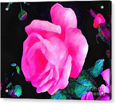 Tinged Pink Rose Acrylic Print by Catherine Lott