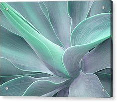 Tinted Agave Attenuata Abstract Acrylic Print