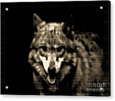 Acrylic Print featuring the photograph Tinted Wolf by Debra     Vatalaro